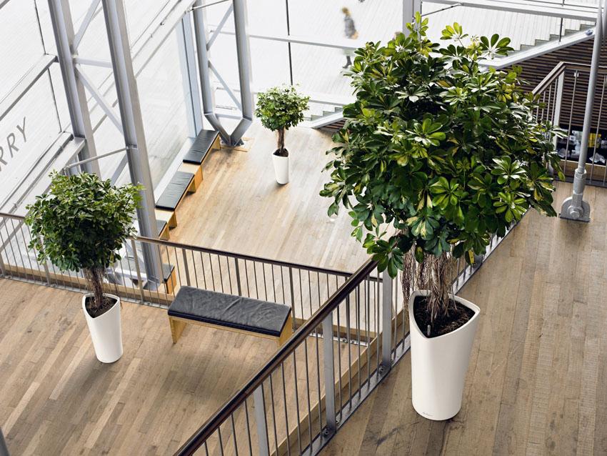 plantas naturales en oficinas